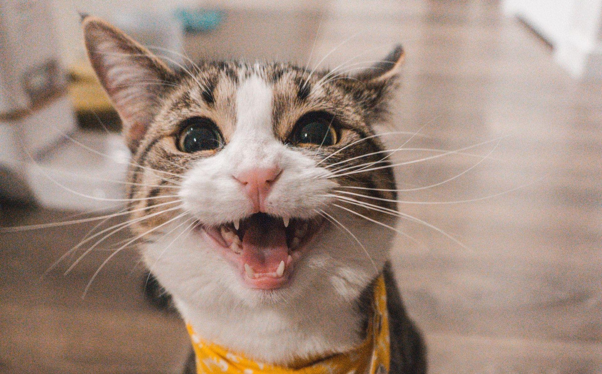 イェール大学の量子力学研究者が「エラーを修正する猫」を作る